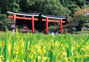 諏訪神社 並立鳥居