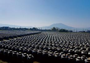 福山の黒酢つぼ畑