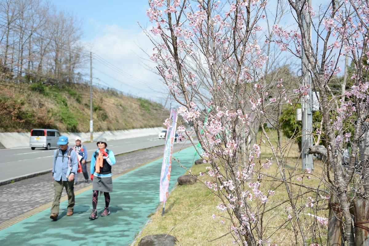 『薩摩街道を歩くお花見ウォーク』開催01