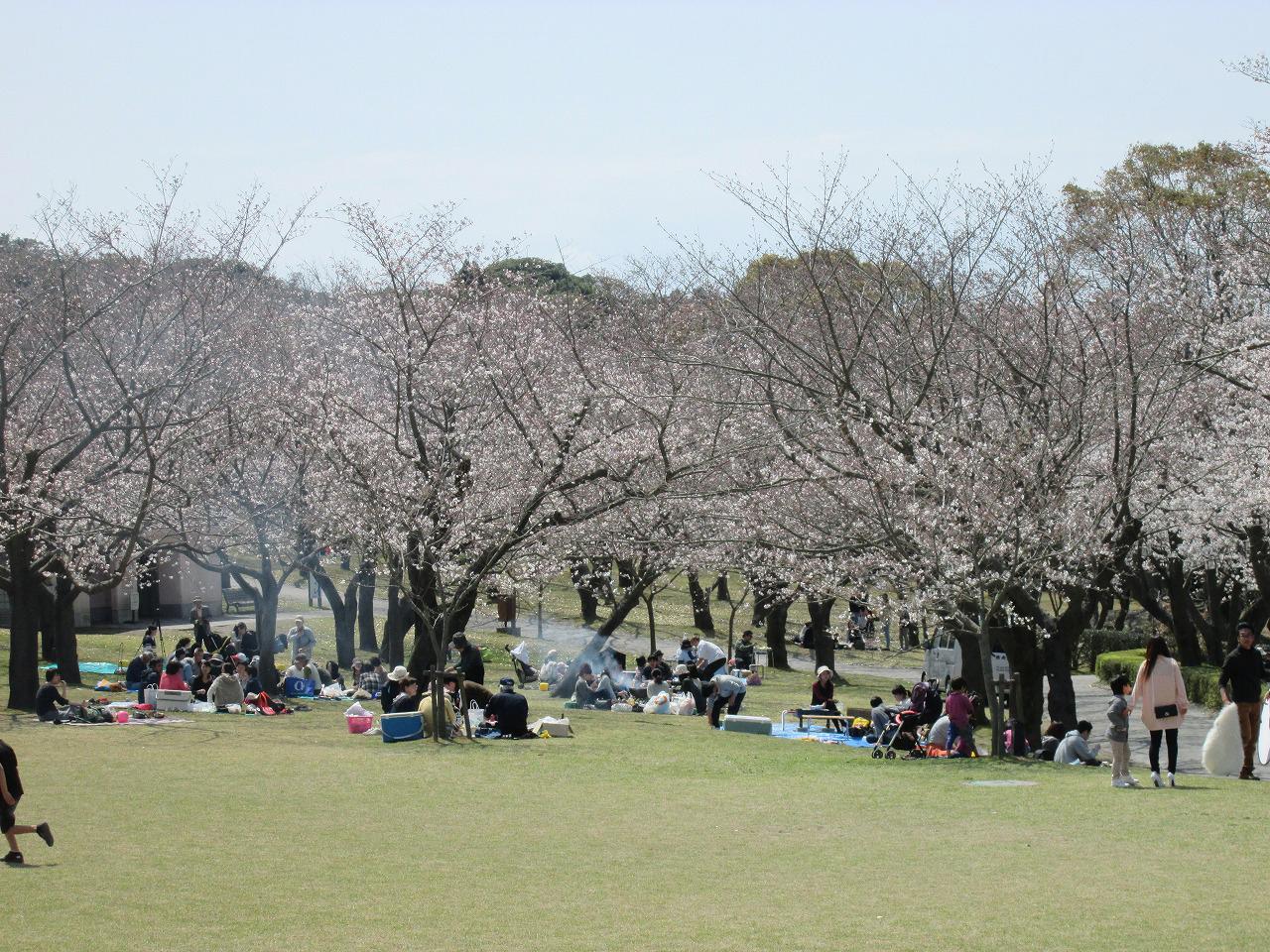 吉野公園桜まつり02