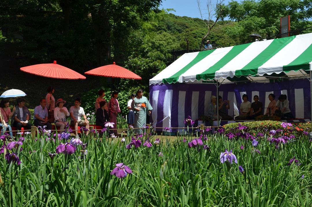 平川動物公園花しょうぶまつり01